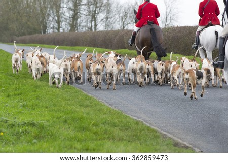 Fox Hunt, horses and hounds - stock photo