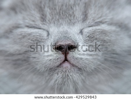 Fragment of a cat's muzzle nose and moustaches - stock photo