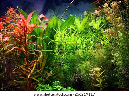 fragment of blue aquarium full of water plants - stock photo