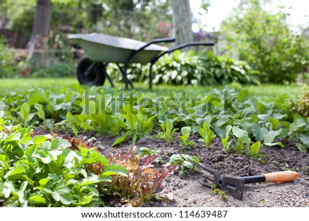 Fragment of garden beds with a young fresh herbs - stock photo