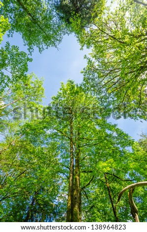Fragment of Inter River Park, North Vancouver, Canada. - stock photo
