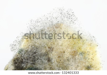 fragment of not fresh mouldy bread - stock photo
