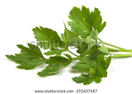 fragrant sprig of parsley - stock photo