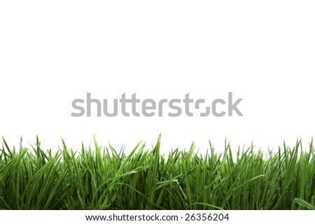 frame background with green grass isolated on white background - stock photo