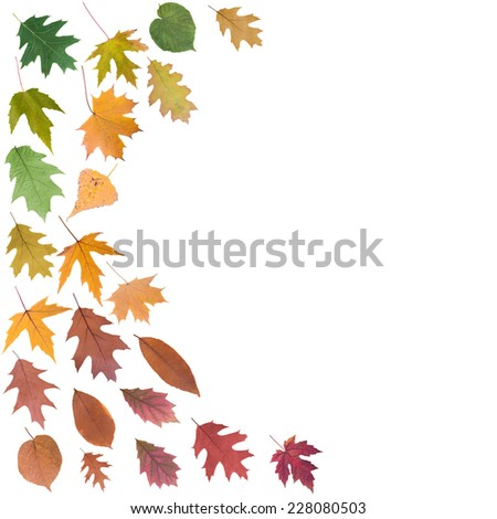 frame big collection set of beautiful colored autumn leaves close up isolated on white background - stock photo