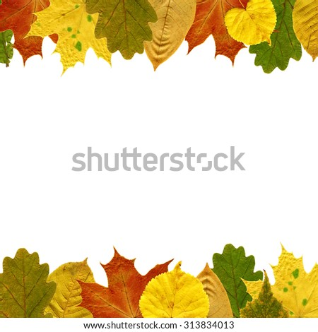 Frame for text of autumn leaves. Isolated on white. - stock photo
