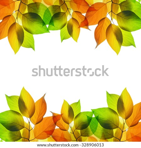 Frame from autumn leaves isolated on white background - stock photo