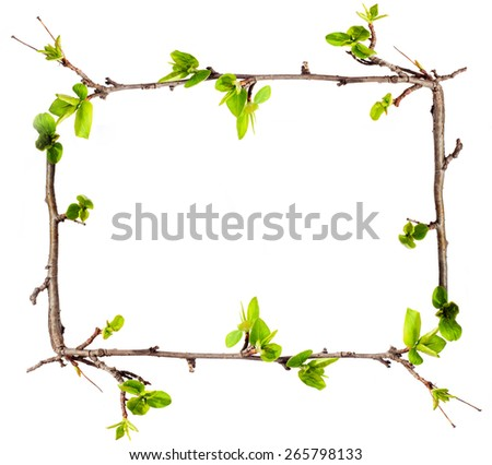 Frame from branches with green leaves. - stock photo