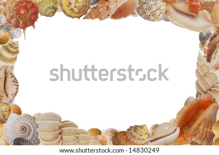 Frame from sea shell on white background - stock photo