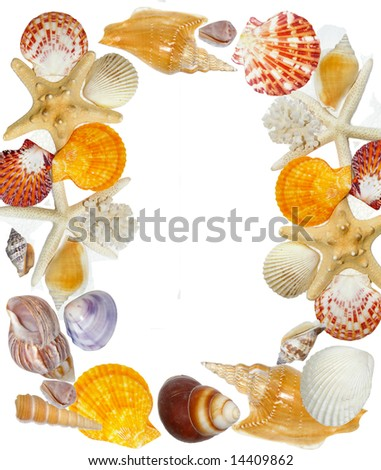frame from sea shells - stock photo