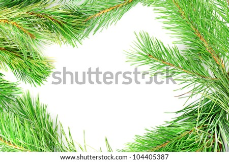 Frame from the pine branches with copy space - stock photo