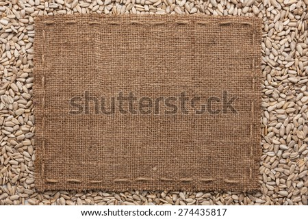 Frame made of burlap with the line lies on  sunflower seeds, with place for your text - stock photo