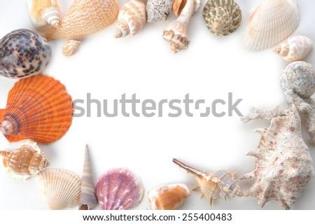 frame made of many sea shells - stock photo