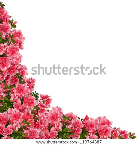Frame of azalea flowers isolated on white. - stock photo