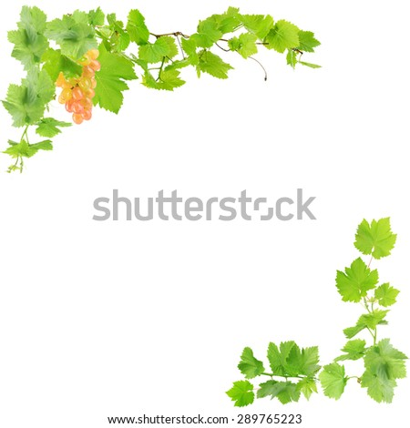 Frame of grape branches with green leaves, isolated on white - stock photo