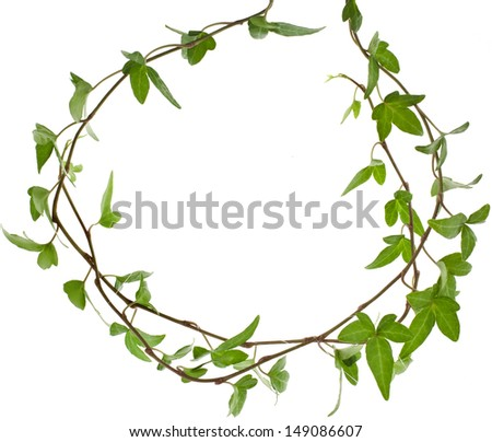 frame of green ivy plant close up surface top view isolated on white background  - stock photo