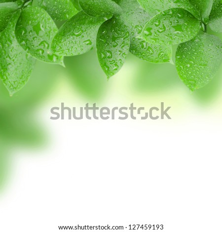 frame of green leaves with water drops - stock photo