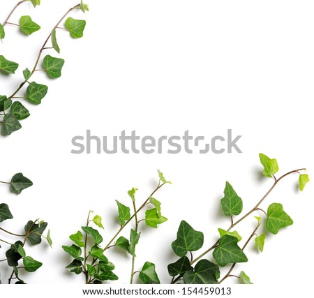 frame of ivy - stock photo