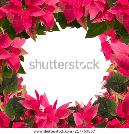 frame of pink poinsettia flower or christmas star isolated on a white background  - stock photo