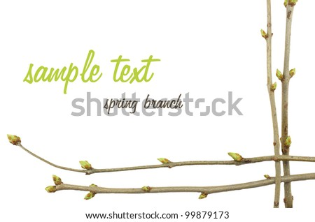 frame spring twig with buds - stock photo