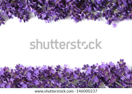Frame with purple lavender flowers on a white background - stock photo