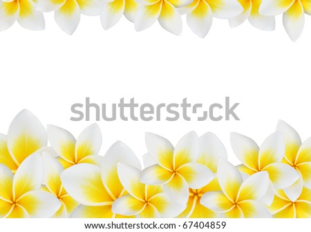 Frangipani design collage isolate on white. - stock photo