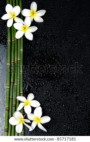 Frangipani flower and bamboo grove in water drop - stock photo