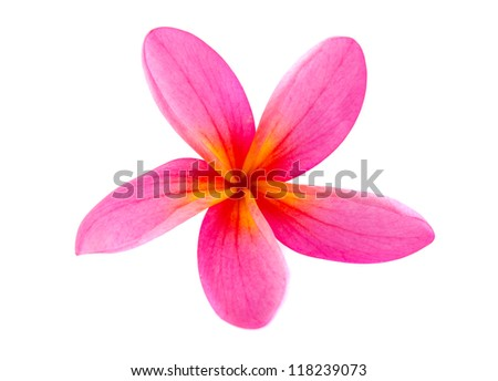 Frangipani flower isolated on white , super close up - stock photo