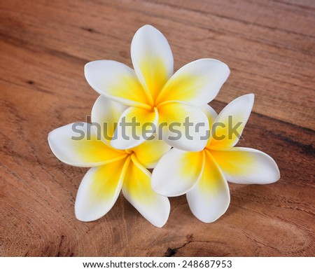 frangipani flower on a wooden background - stock photo