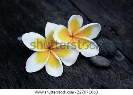 frangipani flower on black wood - stock photo