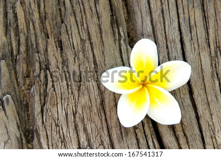 frangipani flower on wood - stock photo