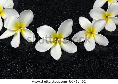 Frangipani flower set of frame on black background - stock photo