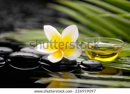 frangipani flower with oil in bowl on pebbles with green plant  - stock photo