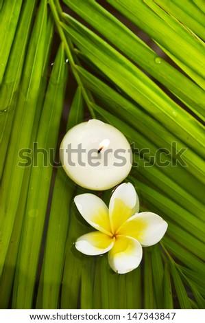 frangipani flowers and soap palm leaf texture - stock photo