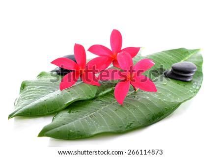 frangipani flowers and zen SPA stones on white background  - stock photo