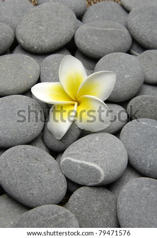 frangipani flowers on gray pebbles - stock photo