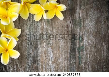 Frangipani flowers on wood background - stock photo