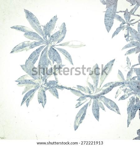 Frangipani leaves vintage background - stock photo