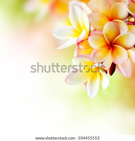 Frangipani Plumeria flowers border Design - stock photo