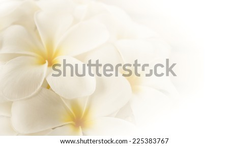 frangipani (plumeria) , in soft color and blur style for background - stock photo