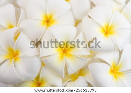 Frangipani Spa Flowers background - stock photo
