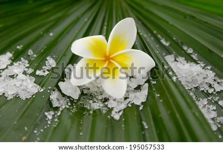 frangipani with pile of salt on palm leaf - stock photo