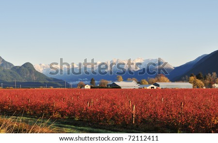 Fraser valley Blueberry farm in Winter near Maple Ridge - stock photo