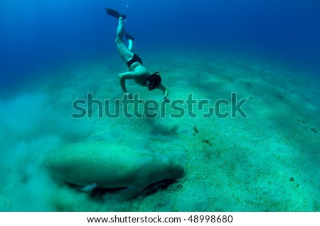 free diving man and manatee in deep sea. - stock photo