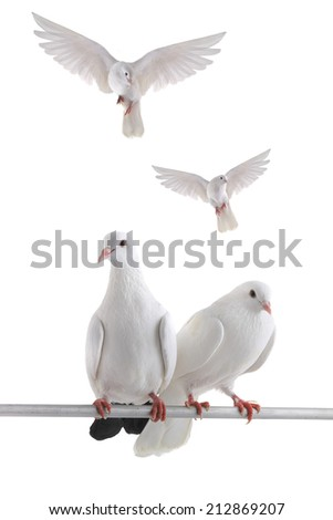 free flying white dove isolated on a white background - stock photo
