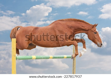 Free horse jumping over obstacle - stock photo