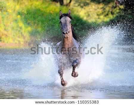 free horse runs trough the splashes of water - stock photo