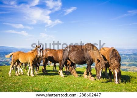 Free horses at the Monte Cucco park in Umbria - stock photo