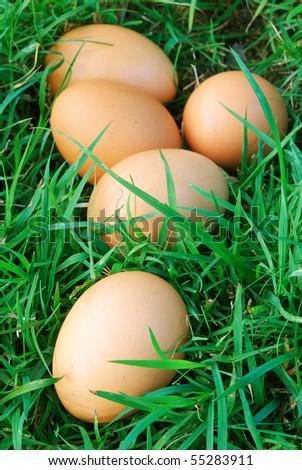 free range eggs - stock photo