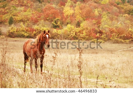 Free red horse on the field by autumn forest - stock photo